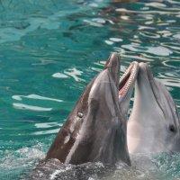 Дельфинарий :: Наташа