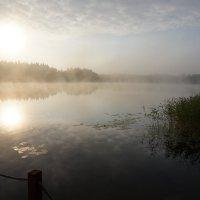утренний туман :: Ольга