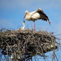 Гнездо на столбе :: Евгений