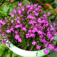 Мои цветочки! :: ирина
