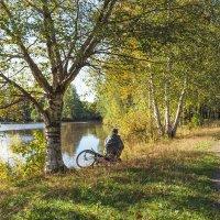 Уголок старого парка (8) :: Виталий