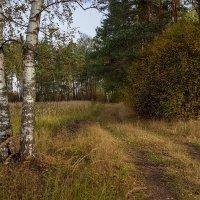 Осень..... :: Андрей Дворников