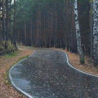 У двух берёз в лесу сосновом. :: Михаил Полыгалов