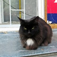 Старый котик :: Лариса