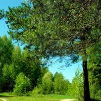 уголок леса :: Владимир