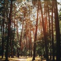 Осенний лес :: Алексей Савченко