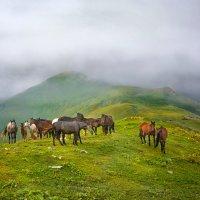В горах Архыза :: Дмитрий Motorin