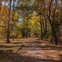 Осень в парк пришла. :: Виктор Иванович