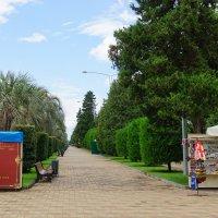 Аллея на набережной :: Сергей Беляев
