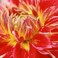 Национальный ботанический сад -Саласпилс. :: Liudmila LLF