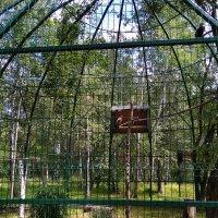 В Белгородском зоопарке (10) :: Алла Григоренко