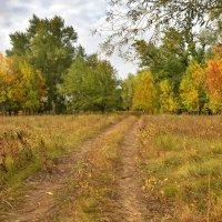 Осенний лес :: Олег Рыбалко