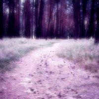 Forest dreaming. :: Андрий Майковский