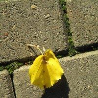 Одинокий листок.. :: Зинаида