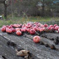 Осенний урожай. :: Андрей Зайцев