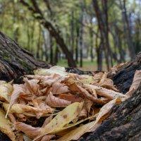 Осень в парке :: Валерий Михмель