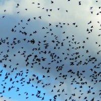 Снова птицы в стаи собираются... :: Алла Захарова