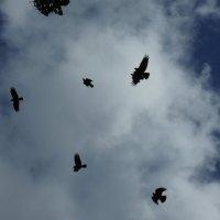 Ты не вейся, чёрный ворон... :: Тамара Бедай