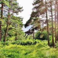 В лесу :: Leonid Tabakov