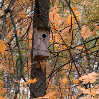 улетели птички :: Олег