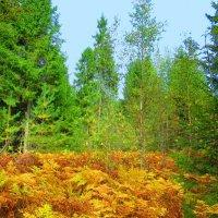 Папоротник в осеннем лесу :: Татьяна