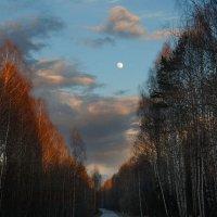 Цвета понравились) :: Сергей Исайчев