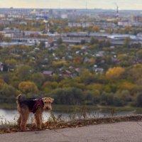 Пёс осени :: Алексей Медведев