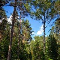 Дорога через лес :: Алексей (GraAl)
