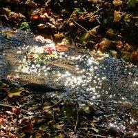 Немного солнца в холодной воде... :: Любовь С.