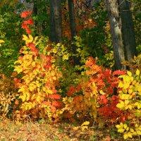 Палитра осени цветная, в ней краски всех цветов живут ... :: Евгений Юрков