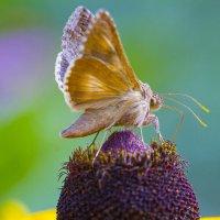 Ароматные цветы прошедшего лета :: leo yagonen