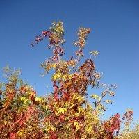 Осеннее разноцветье :: Ирина