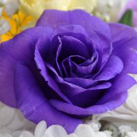 Необычный цветок из букета! :: Валентина  Нефёдова