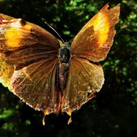 В Октябре все бабочки потрепали свои крылья :: vodonos241