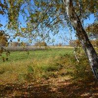 Ходит  осень  по  лесам :: Геннадий С.