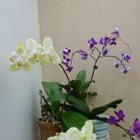 На выставке орхидей... :: Galina194701