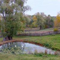 Осень на окраине села.. :: Ната Волга