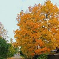 Осень выкрасила клёны... :: sm-lydmila Смородинская
