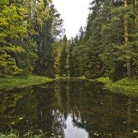 Лесные зеркала. :: Senior Веселков Петр