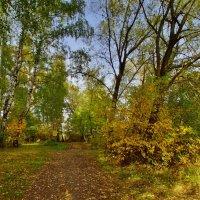 В осеннем лесу :: Наталья Лакомова