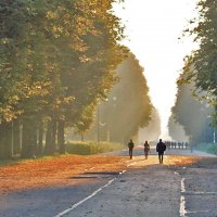 Парк Крестовский остров - осеннее утро :: Екатерина Торганская