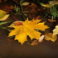 Осень :: Ольга Бархатова