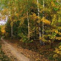 Всё слышнее эхо листопада... :: Лесо-Вед (Баранов)