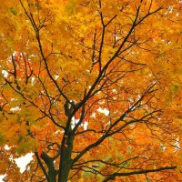 Осень :: Julia Volkova