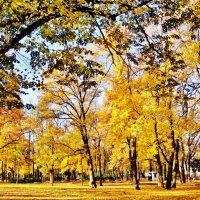 Александровский сад :: Aida10