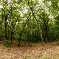 Крымские леса :: Serega