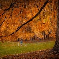 Осень в парке :: Дмитрий Motorin