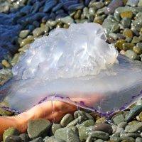 Медуза на ладони :: Сергей Беляев