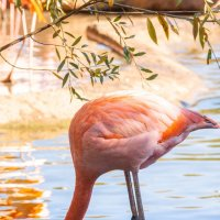 фламинго :: Alex Bush