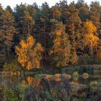 краски осени :: Владимир Ефимов